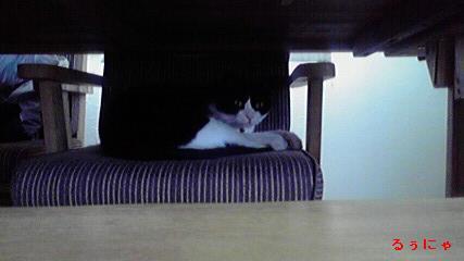 テーブルの下のるぅにゃ