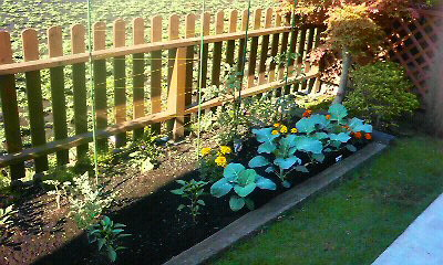 家庭菜園6.1