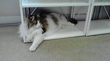キティの部屋のにゃん 凶暴にゃん T動物