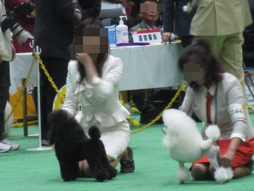 20100404show.jpg