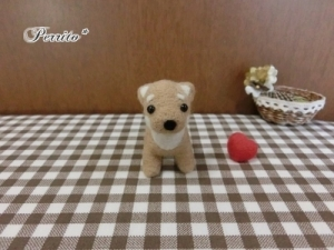 10月柴犬1