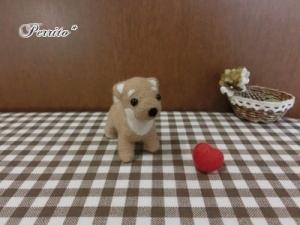 10月柴犬2