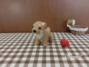 10月柴犬3