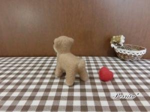 10月柴犬4