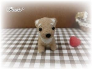 10月柴犬5