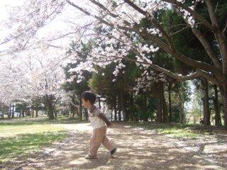 2010年4月 お花見 096
