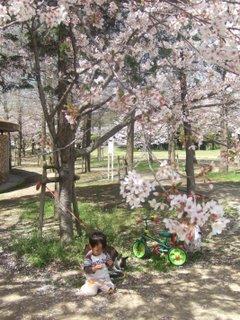 2010年4月 お花見 083