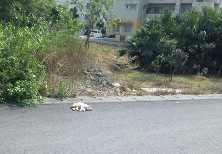 散歩途中の猫