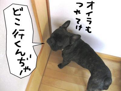 ドアの番犬