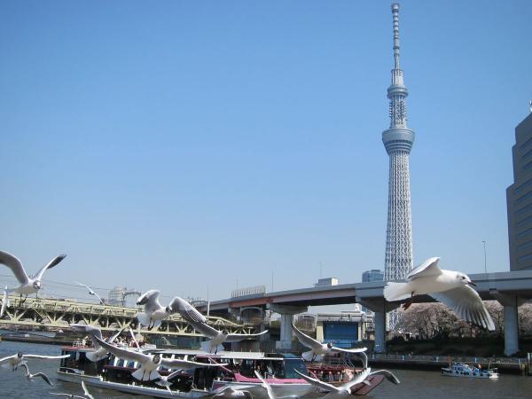 東京スカイツリー5-3〔フリー写真〕