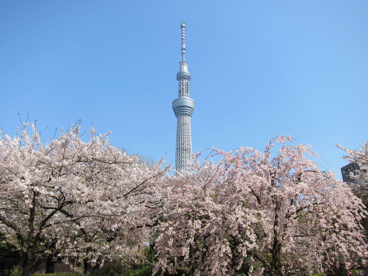 花や蝶、鳥などの写真 8|SABOの東京名所写真