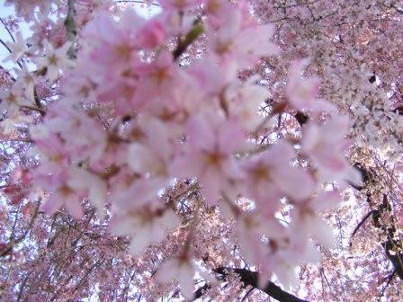 コピー ~ My Kazoku 09,3 1681