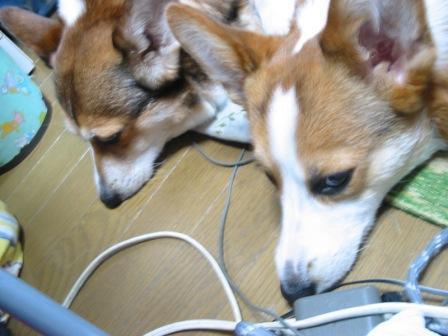 My Kazoku 09,3 2012