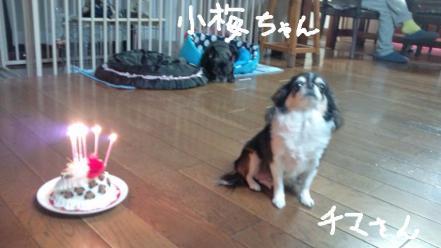 チマさん誕生日、チマと小梅