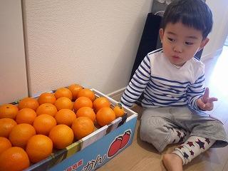 130210_たんかん (2)