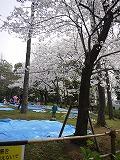 130323_有栖川公園 (2)