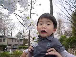 130323_有栖川公園つーくんと桜★