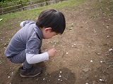 130323_有栖川公園つーくん桜拾い (2)