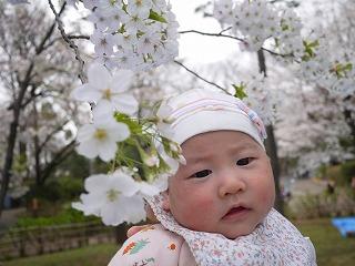 130323_有栖川公園奈々ちゃんと桜★