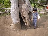 130323_有栖川公園木の根元 (1)