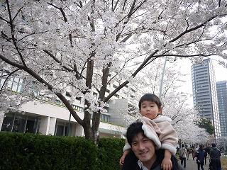 130324_MT桜だいつー