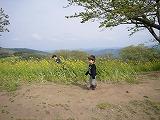 130414_マザー牧場菜の花 (かくれんぼ) (2)