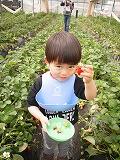 130414_苺狩り (3)