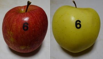 20141129-apple 6 (14)-加工