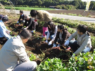 20111103芋掘り風景.JPG