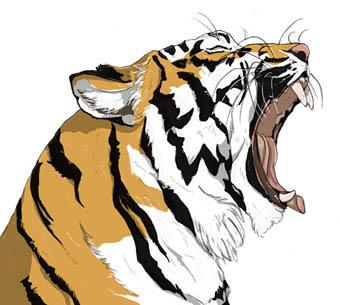 虎あくび横顔