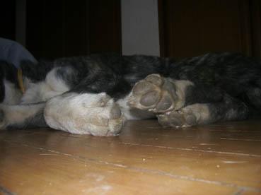 さじフテ寝2