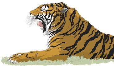 虎横あくび