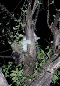 木登り猫アップ