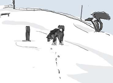 雪ドッグラン
