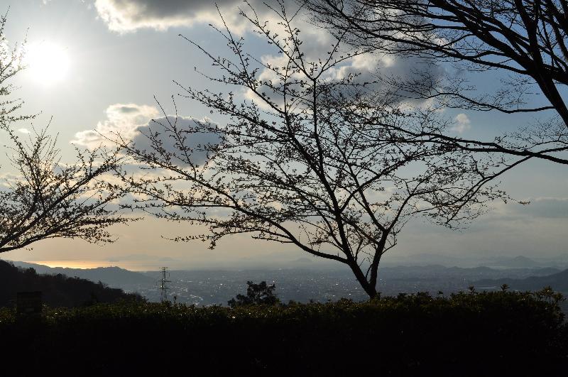 東温市南方 塩ヶ森ふるさと公園 お花見スポット