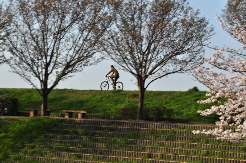 伊予郡砥部町 赤坂泉公園の桜