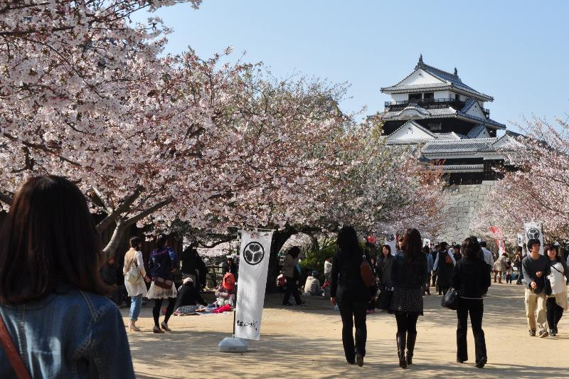 松山市丸之内  松山城山公園の桜