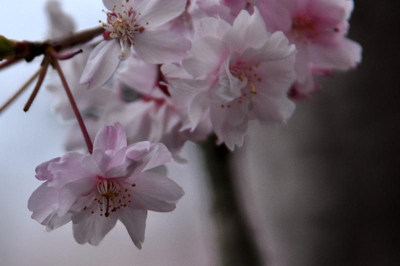 春の京都 清水寺