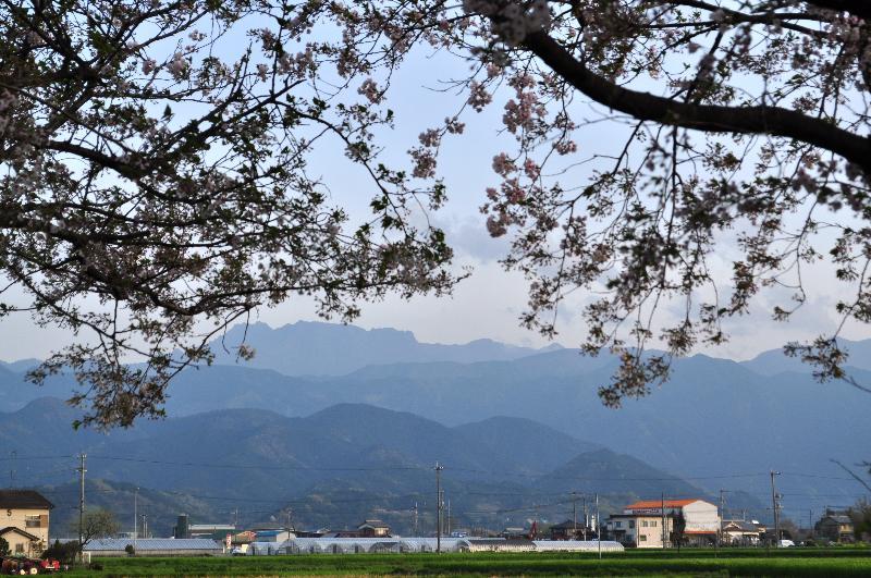 西条市 石鎚山と桜