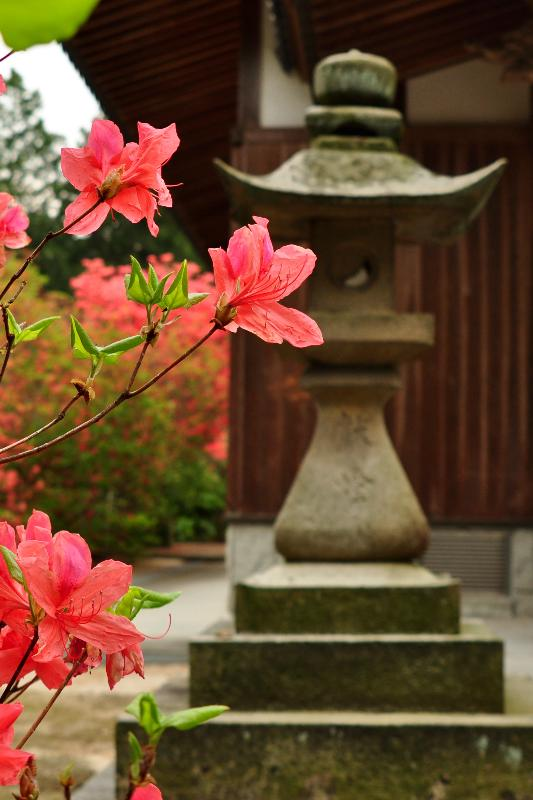 西条市 高知八幡神社 やまつつじ