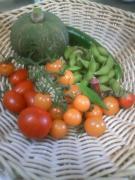 20100724収穫