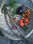 20100723収穫