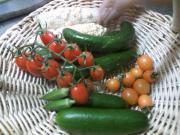 20100725収穫