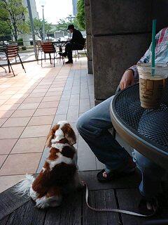 タリーズコーヒー 何見てる?
