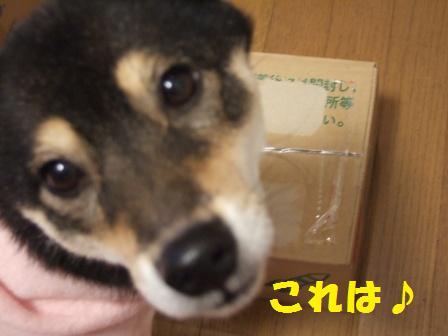 blog4896.jpg