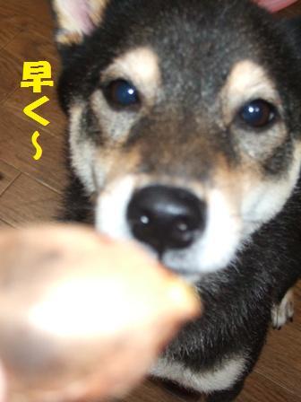 blog4901.jpg
