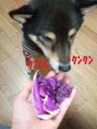 blog4911.jpg