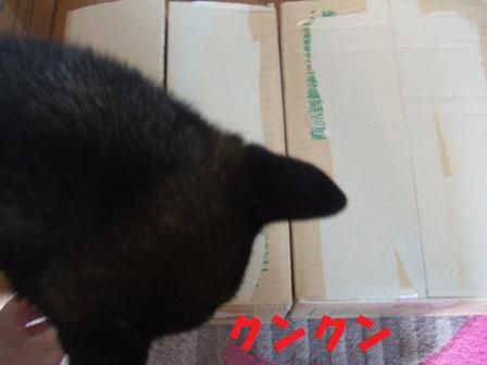 blog5085.jpg