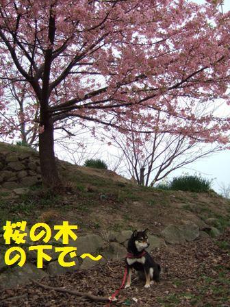 blog5137.jpg