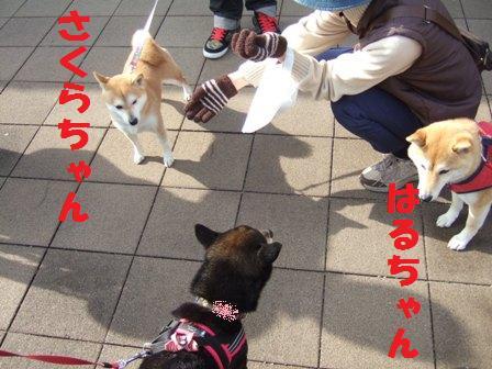 blog5170.jpg